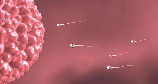 gyakorlatok az erekció potenciájának javítására
