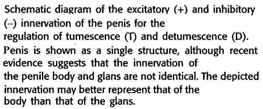 kefir és erekció