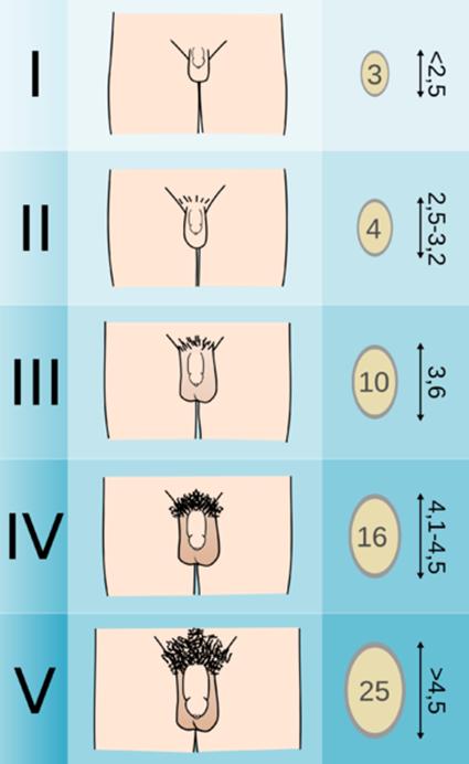 baklosan és erekció orvos ellenőrzi a péniszt