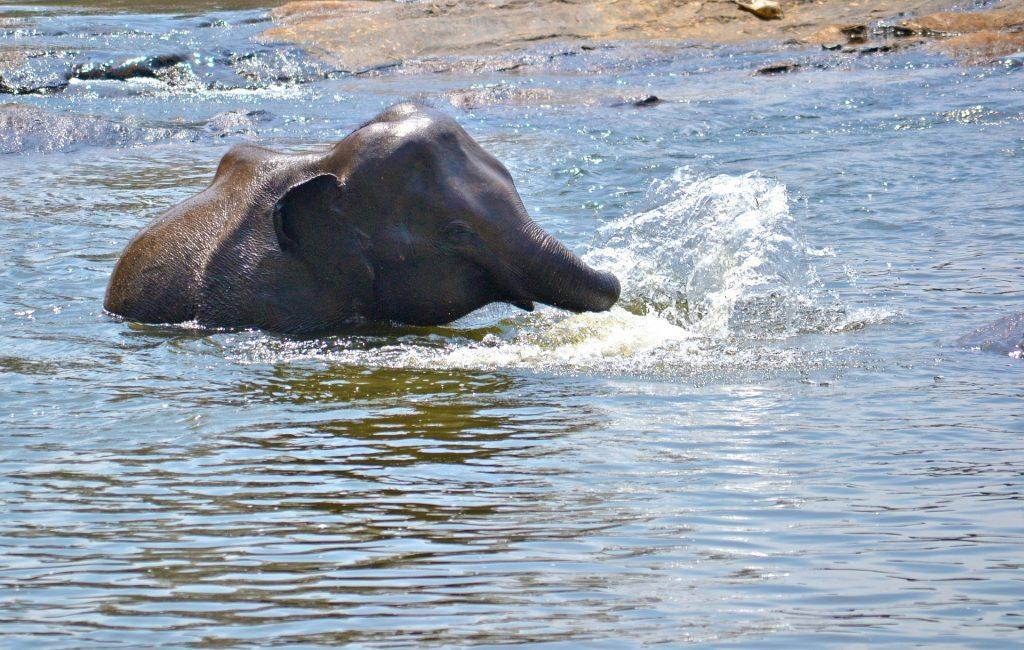 elefánt felállítása