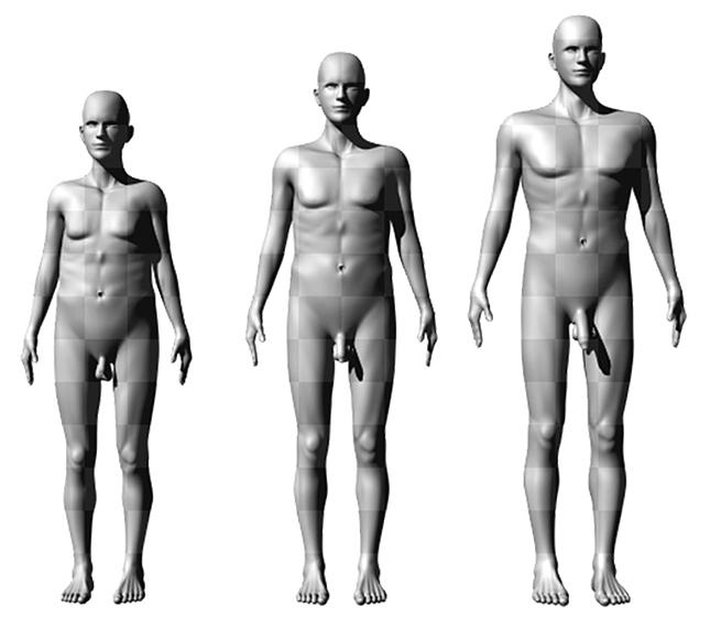 férfiak átlagos péniszhossza
