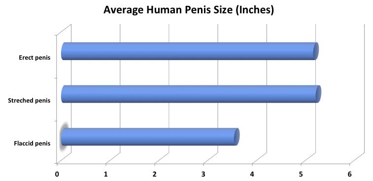 a pénisz kicsi az erekciójában normális)