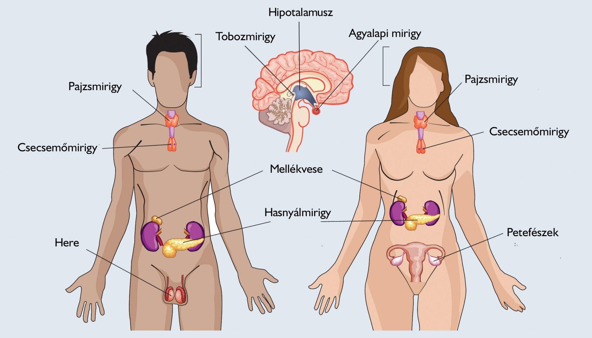 női szervek felállítása