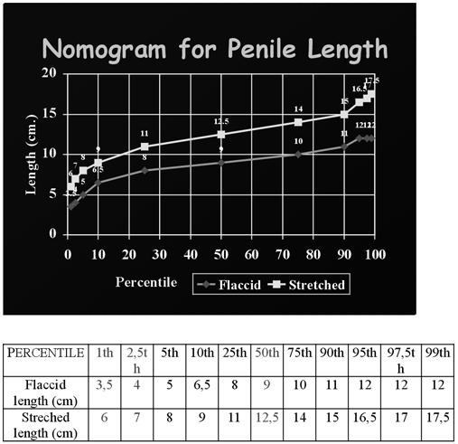 a pénisz átlagos mérete az erekció során)