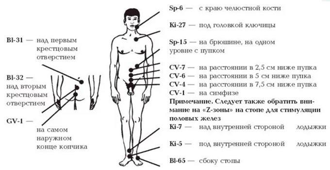 méhcsípő pénisz)