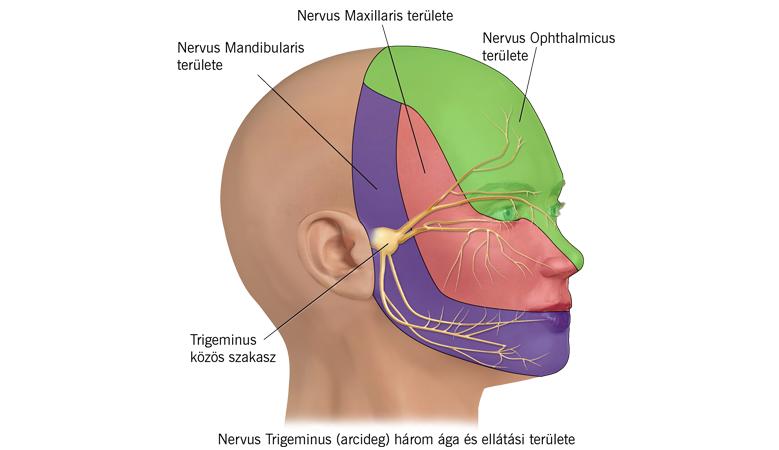 erekció során fájdalmas a fej kinyitása