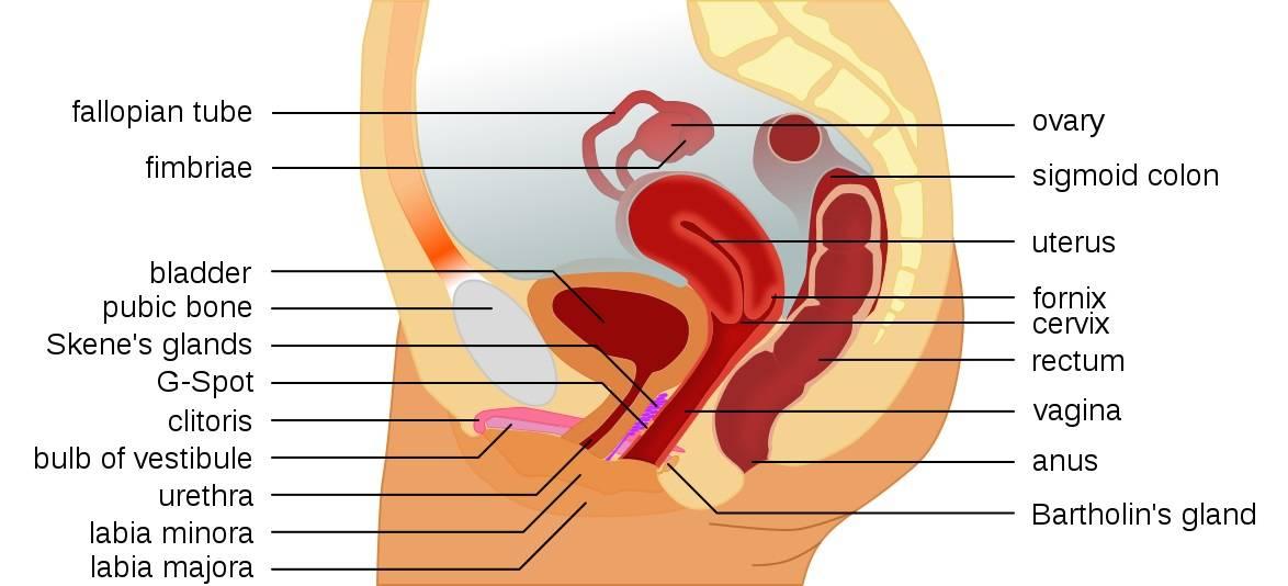 pontokat a pénisz stimulálásáért