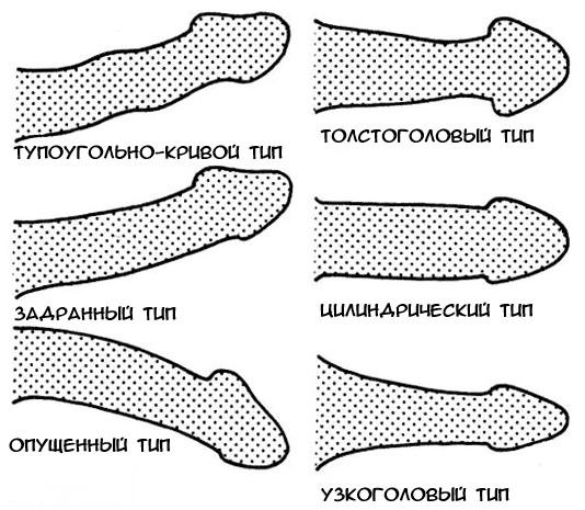 a péniszek alakja és mérete