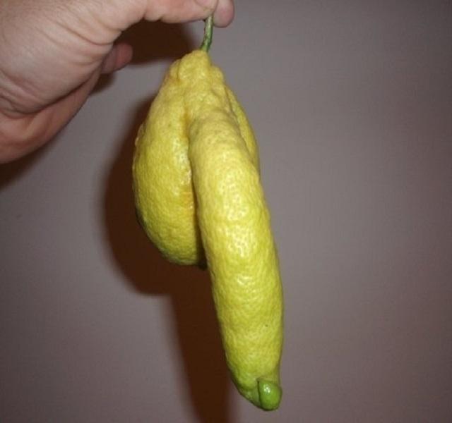 a pénisz nem nőhet