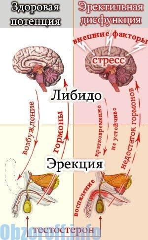 milyen gyakorlatokat kell elvégeznie az erekció érdekében)