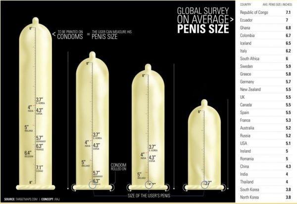 mekkora a pénisz mérete