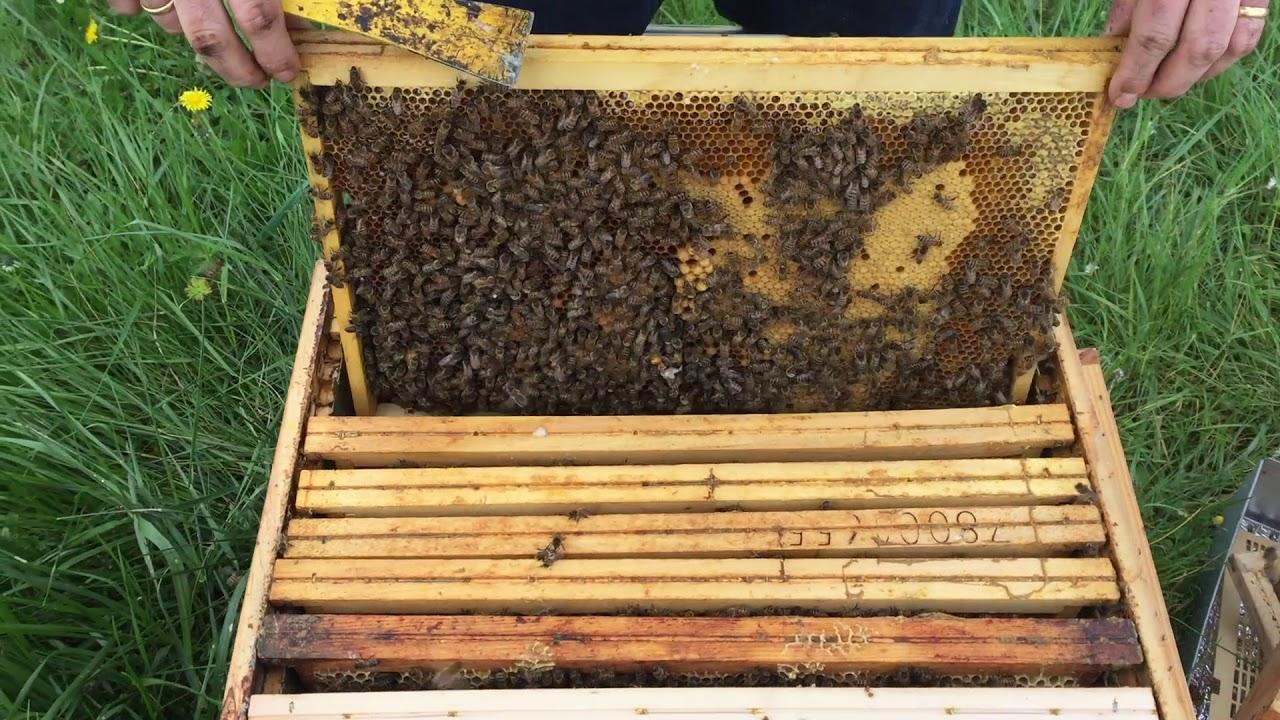 méhek felállítása)